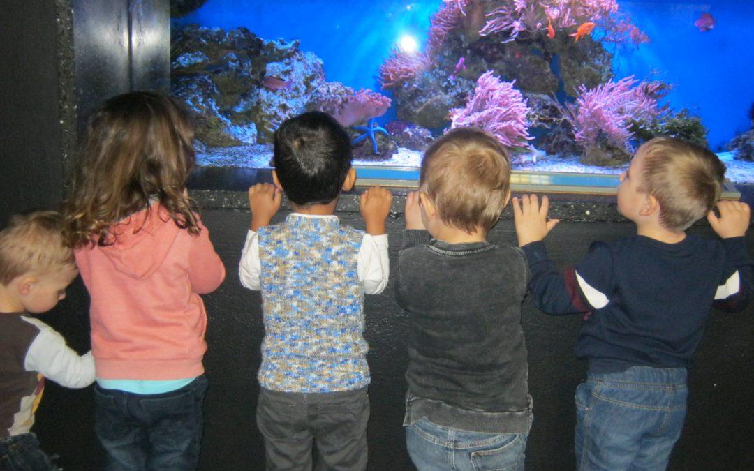 Kindergarten unterwegs – Im Aquarium und Tierpark